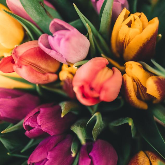 Rosas de primavera