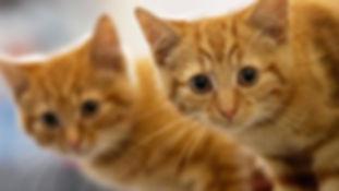 cat sitter, cat sitting, cat care
