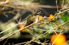 Birdwatching tours Panama