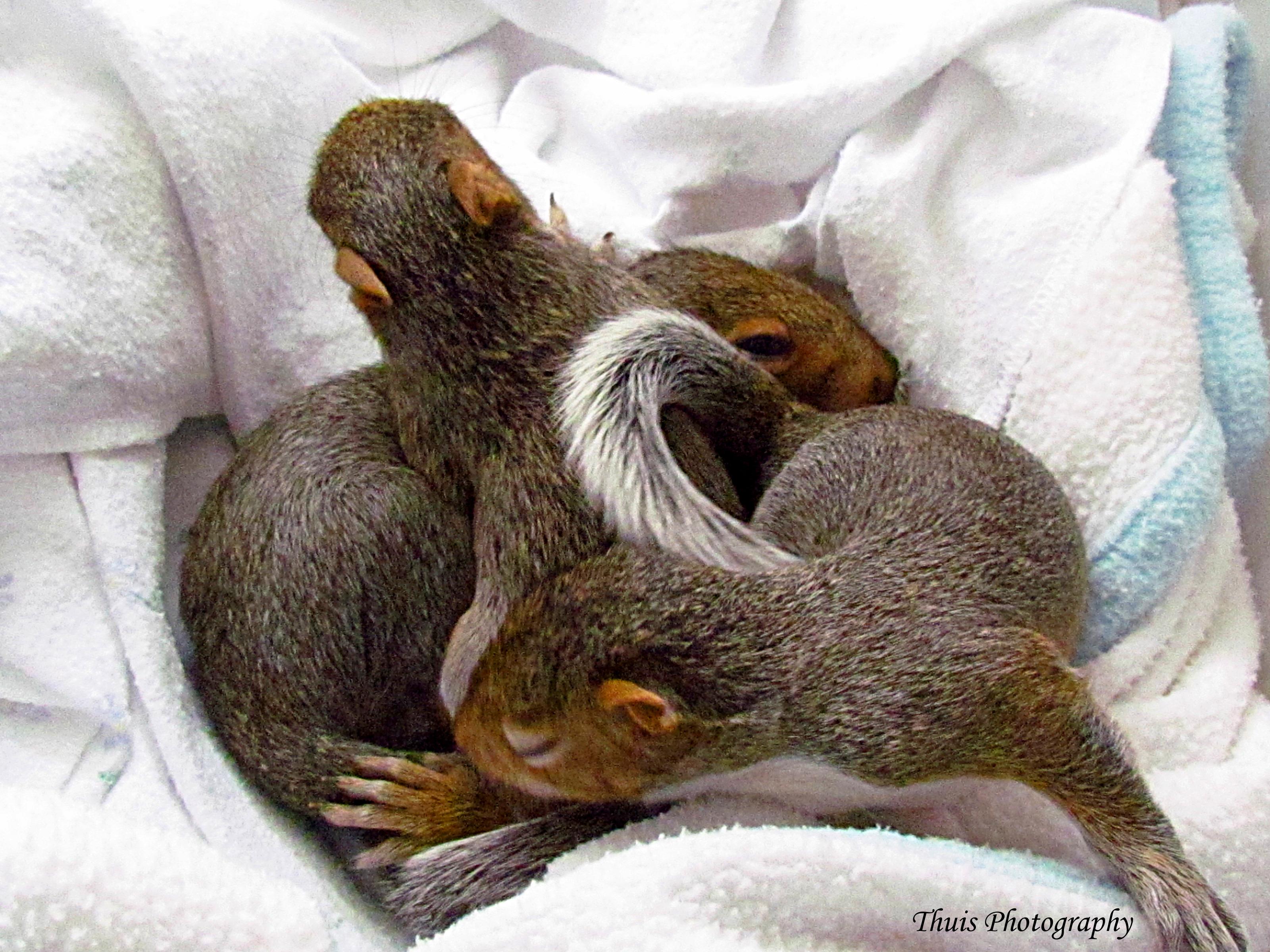 Sleeping Infants