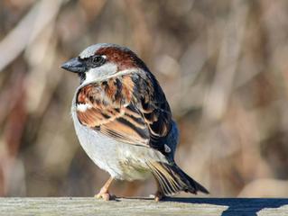 Bird Struck a Window?  Don't Wait to Seek Help.