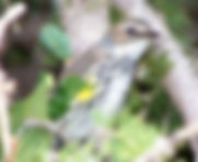 Bird Watching Hike Newfoundland