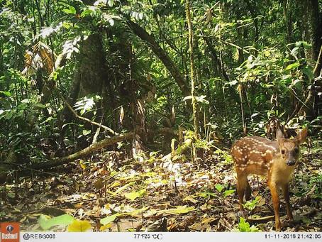 #AmazonCam: Ayúdanos a conservar la Amazonía