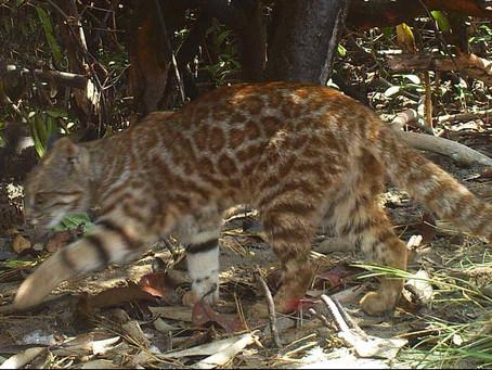10 raros animales de la costa peruana que tal vez no conocías!