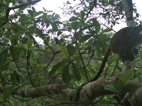 Puentes de dosel: Cosiendo el bosque