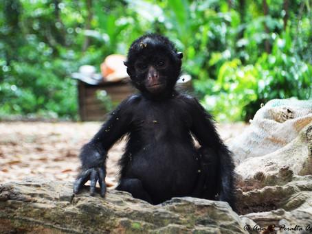 Tómate tu foto con el mono y compártela con tus amigos en Facebook