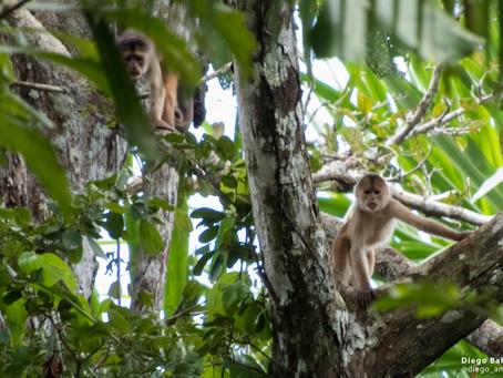 5 cosas que NO debes hacer si visitas la selva