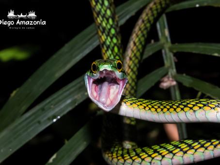 ¿Se pueden estudiar reptiles con cámaras trampa?