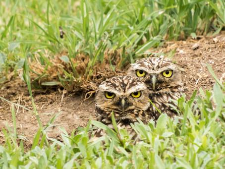 No es que la fauna está retornando, sino que ahora la estamos apreciando más [FOTOS]
