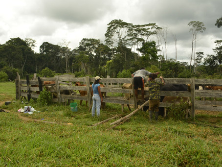Coexistencia con Fauna en Latinoamérica