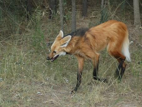 10 raros animales de la selva Peruana que tal vez no conocías!