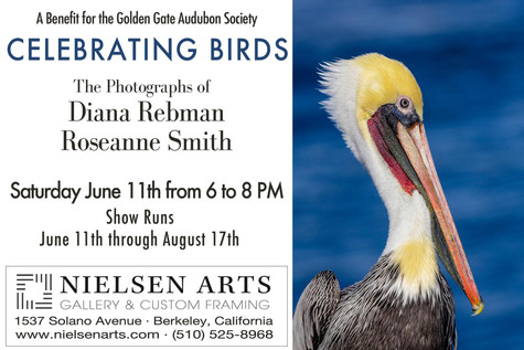 Celebrating Birds- A Benefit for the Golden Gate Audubon Society
