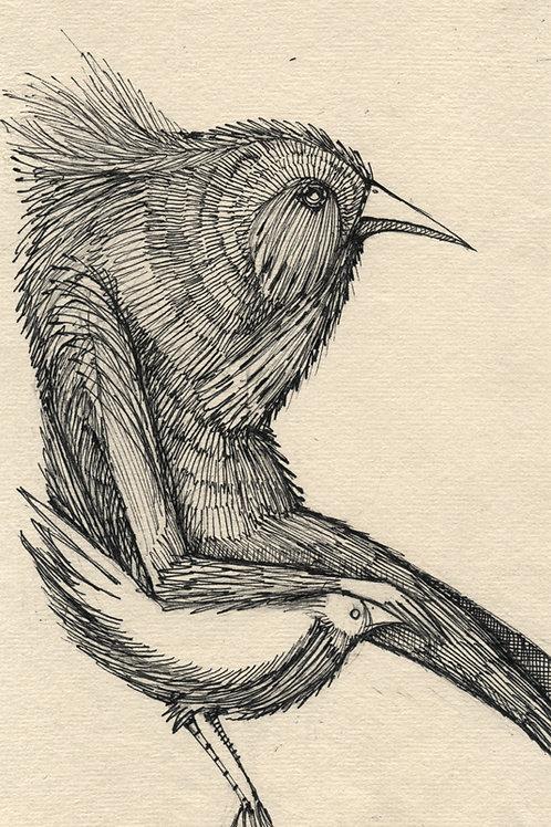 Bird Malaise