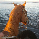 Located a 10 min horse ride to the beach!