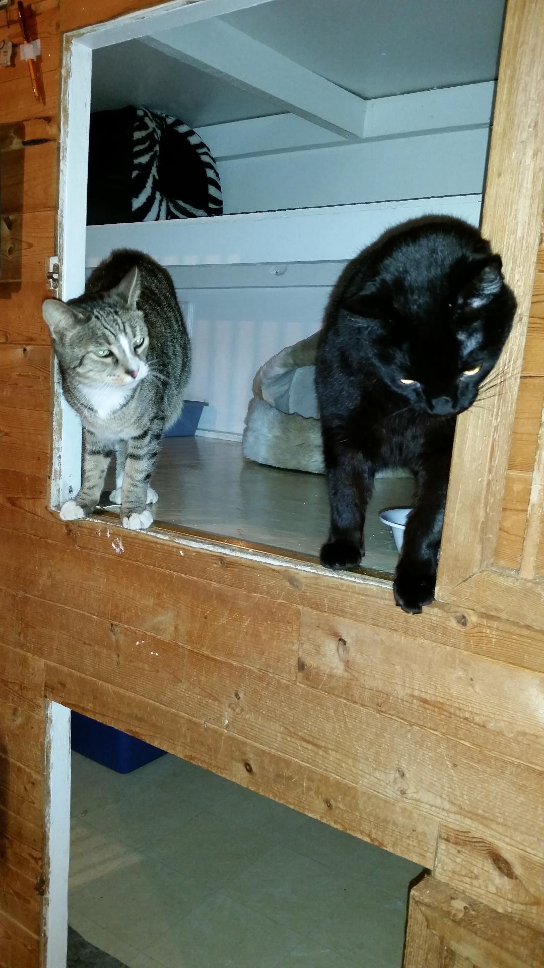 Monty & Flea 01.2015