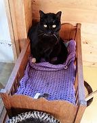 Cat comfort guaranteed!