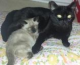 Leila and Kobe