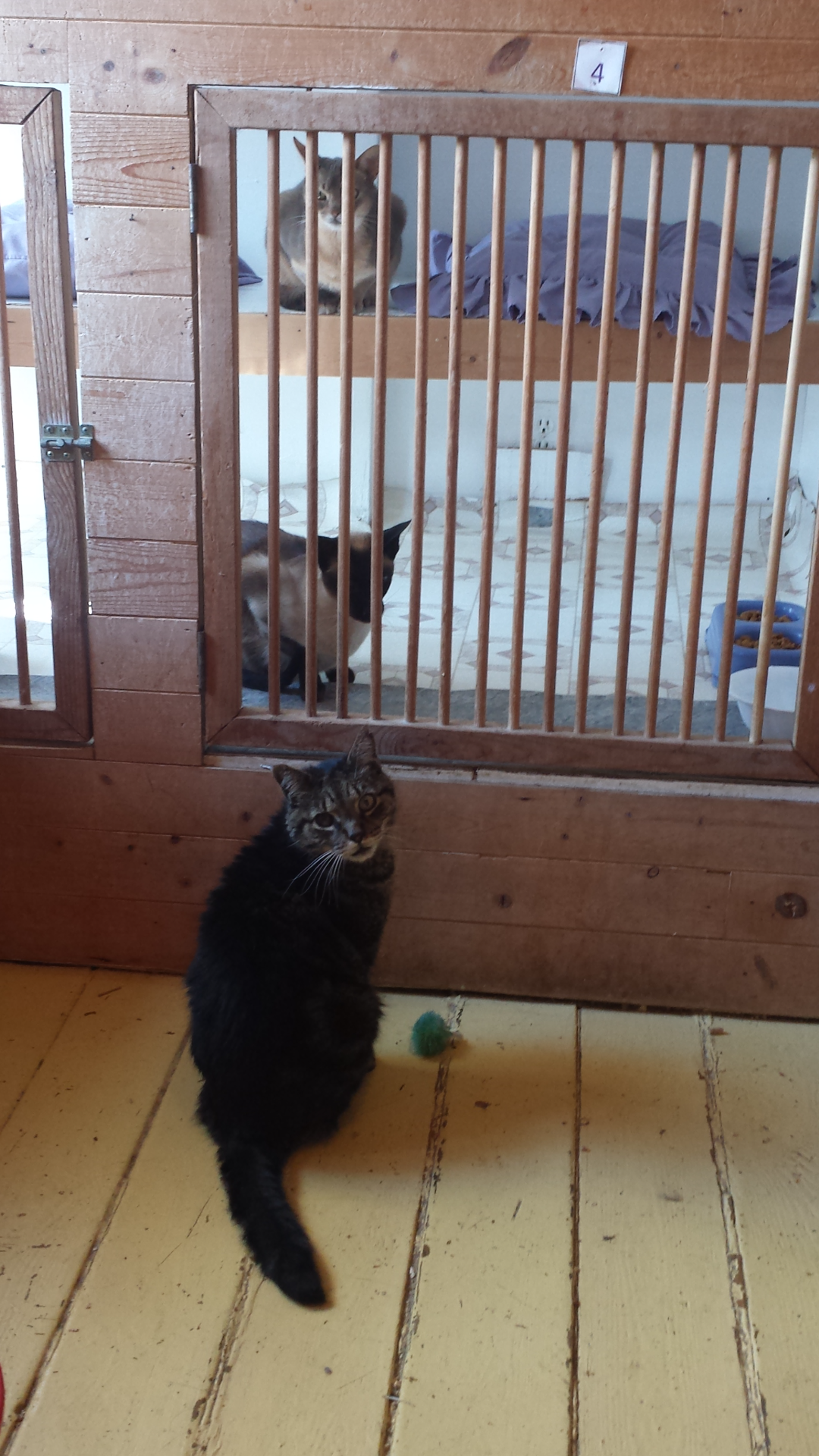 Buster checking out his fellow Kitty Kottage camp buddies Linus & Fraser 08.