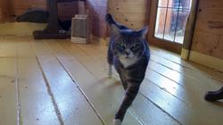 Nacho doing the cat walk 03.2015