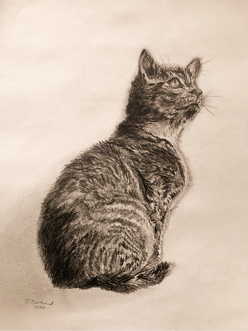 Cat Sketch Original Drawing