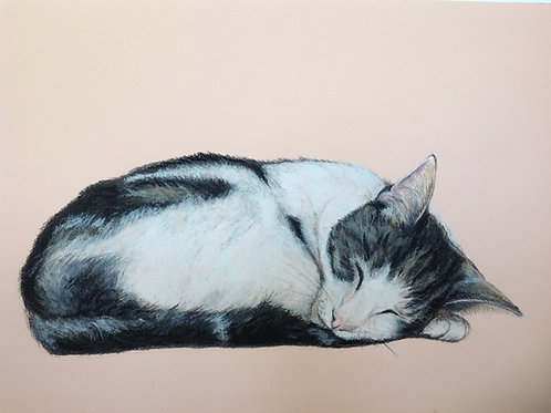 Original Sleeping Jack Cat on Pink
