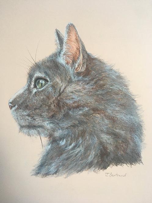 Original Moon Cat