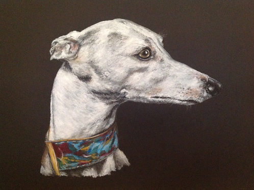 Limited Edition Print of Greyhound on Black
