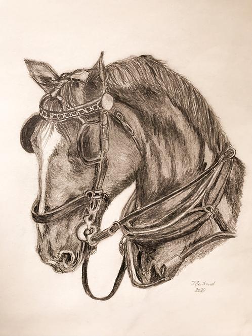 Carriage Horse Original Sketch