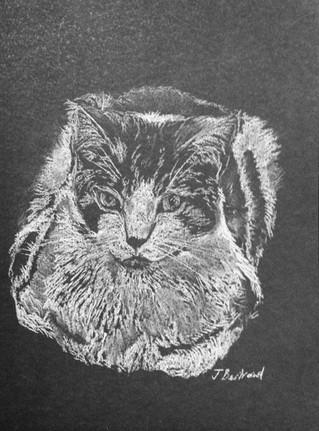 Cat on Black