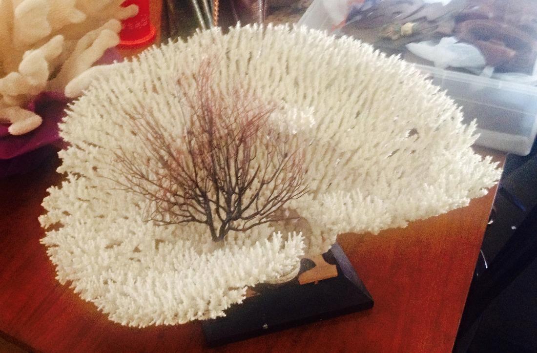 SOLD Coral bloom w/ black coral