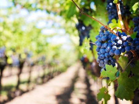 Conocer la viña