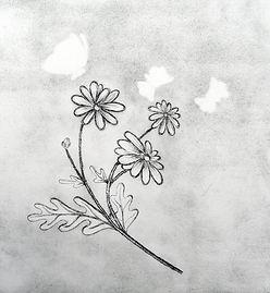 Ghost butterflies.jpg