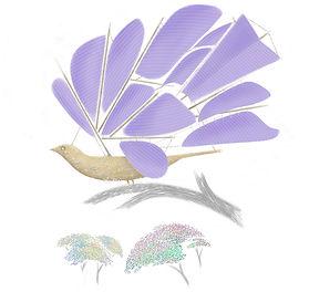 Frigate Bird 2.jpg