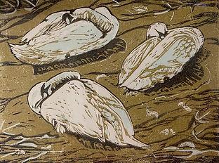 Swans at Whitehaven Harbour.jpeg