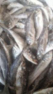 frozen_food_fish-1.jpg