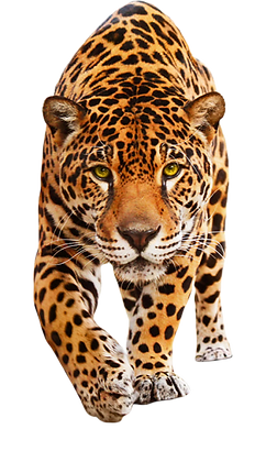 jaguar-face-removebg-preview.png