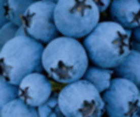 blueberries only.png