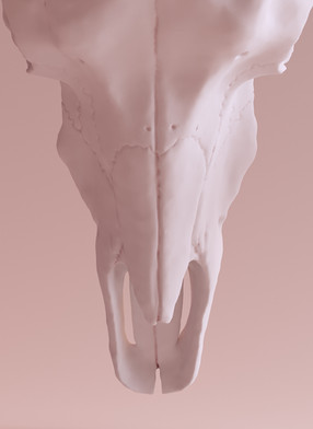 Cráneo Ibex 3D