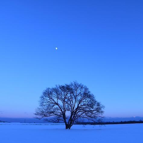 03冬はるにれ(夕日).jpg