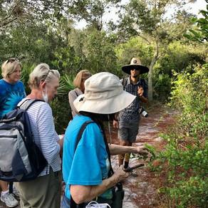 ELC Members Only Guided Walk |  Sebastian Inlet Hammock Trail