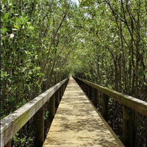 Walks on Wednesdays | Guided Nature Tours in Vero Beach