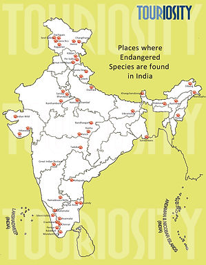 Endangered species in India and where to find them