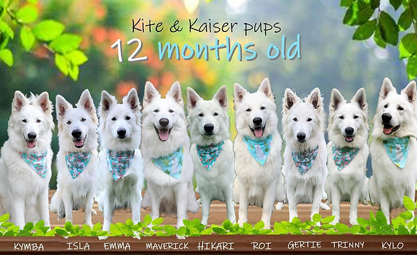 pups 12 months.jpg