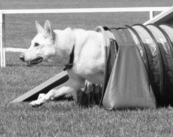 Copy of calagility9 (2)