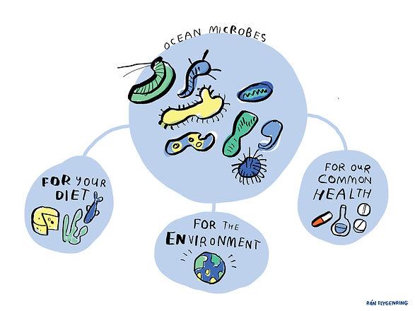 RanFlygenring-MicrobiomesDrawings12.jpg