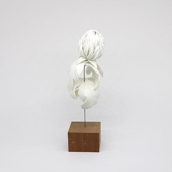 Single Flower | By Isabel Dodd