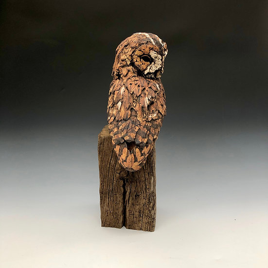 Tawny Owl | By Simon Griffiths
