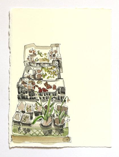 'Garden Series' Sketch | By Helen Beard