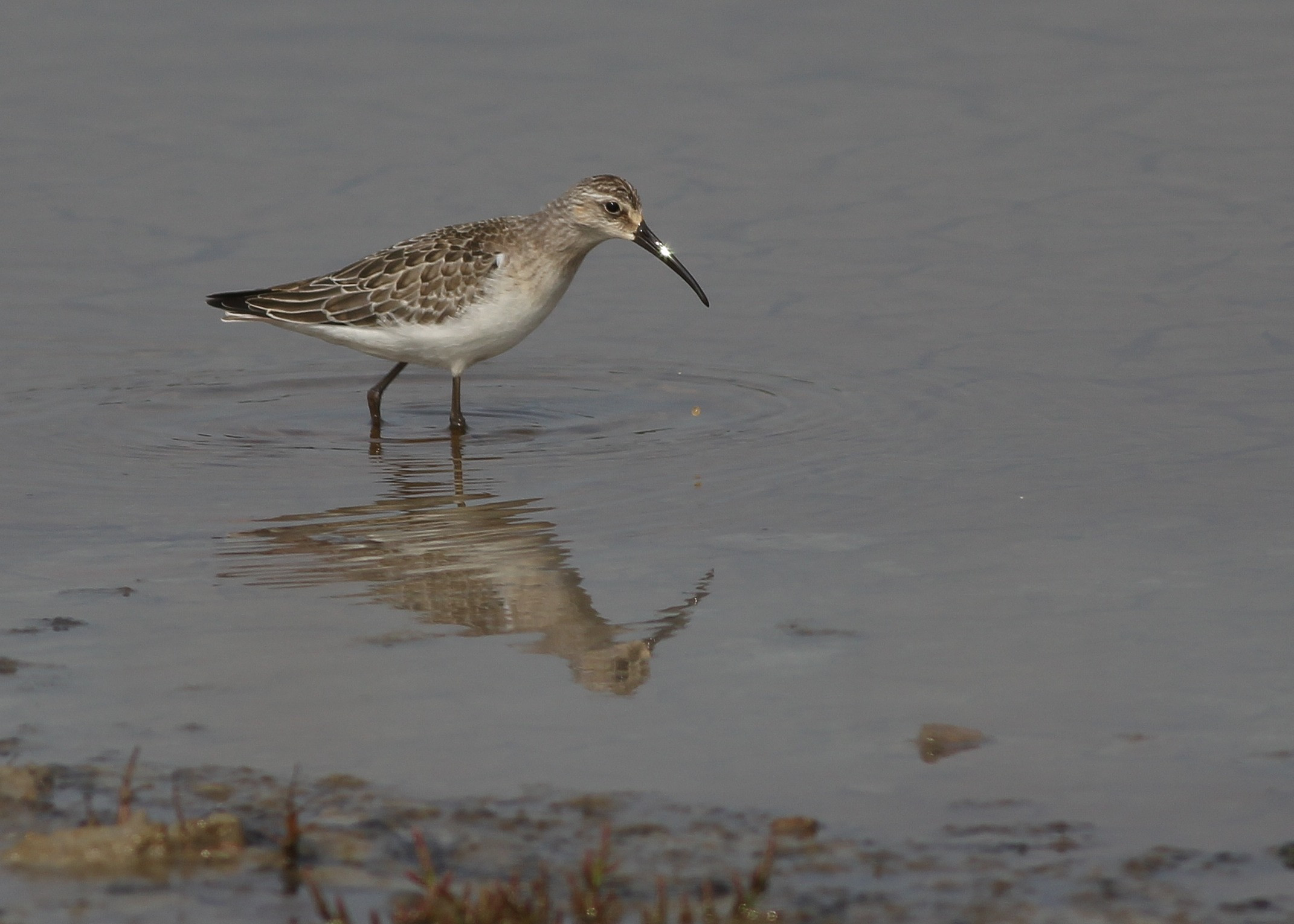 Wader Identification Course