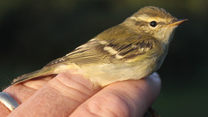 2020 Keyhaven bird-ringing report